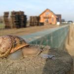 Ujęcia Snails-Pol